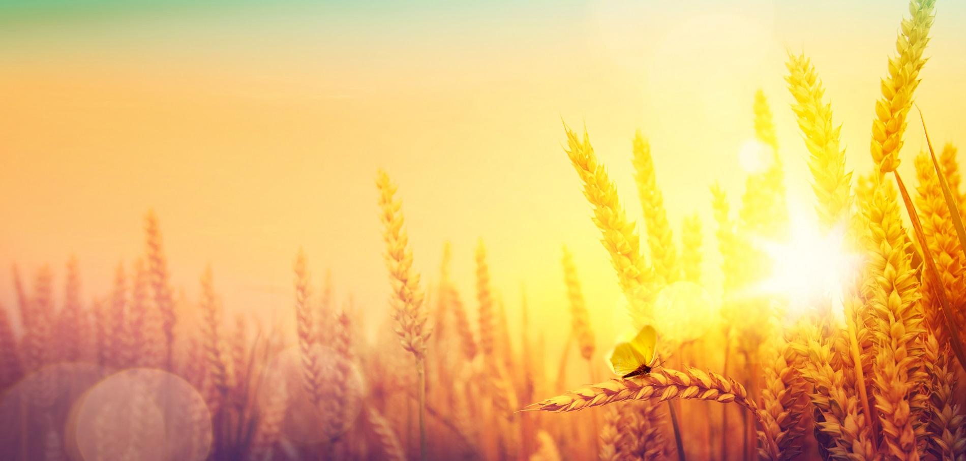 La agricultura es esencial para combatir el cambio climático