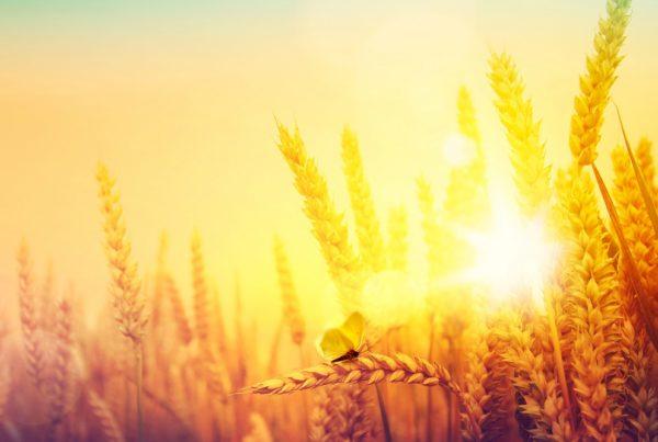 agricultura cambio climático reducción de emisiones desertificación erosión aepla