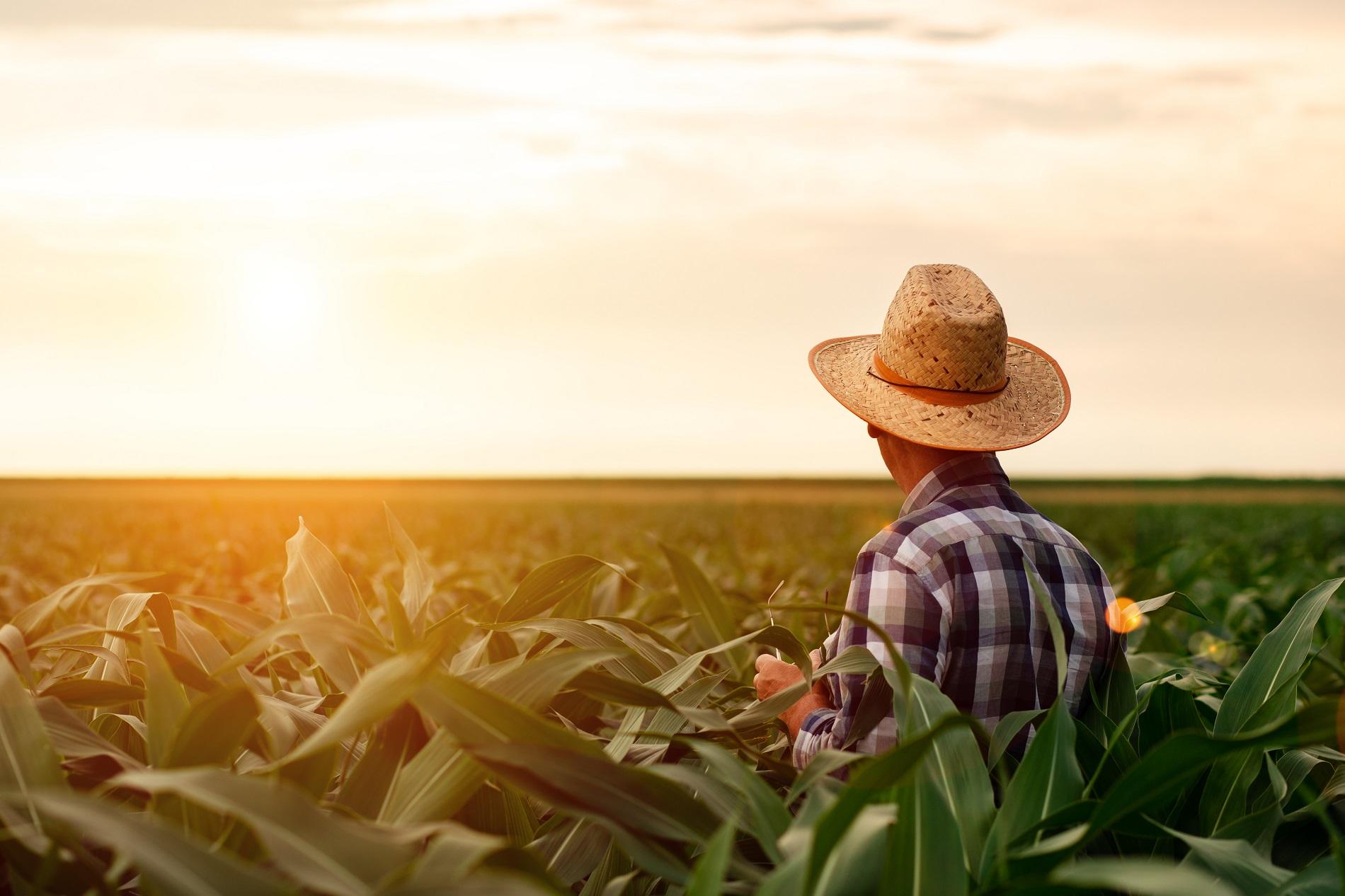 ¿Cuáles son los principales peligros para tus cultivos?