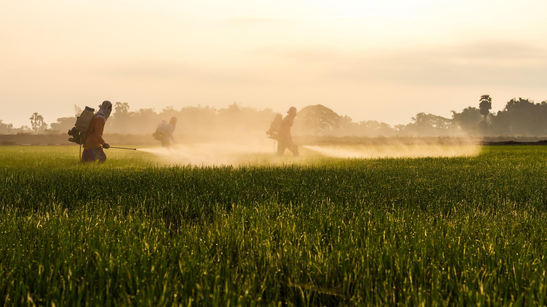 Riesgos asociados al uso de productos fitosanitarios ilegales