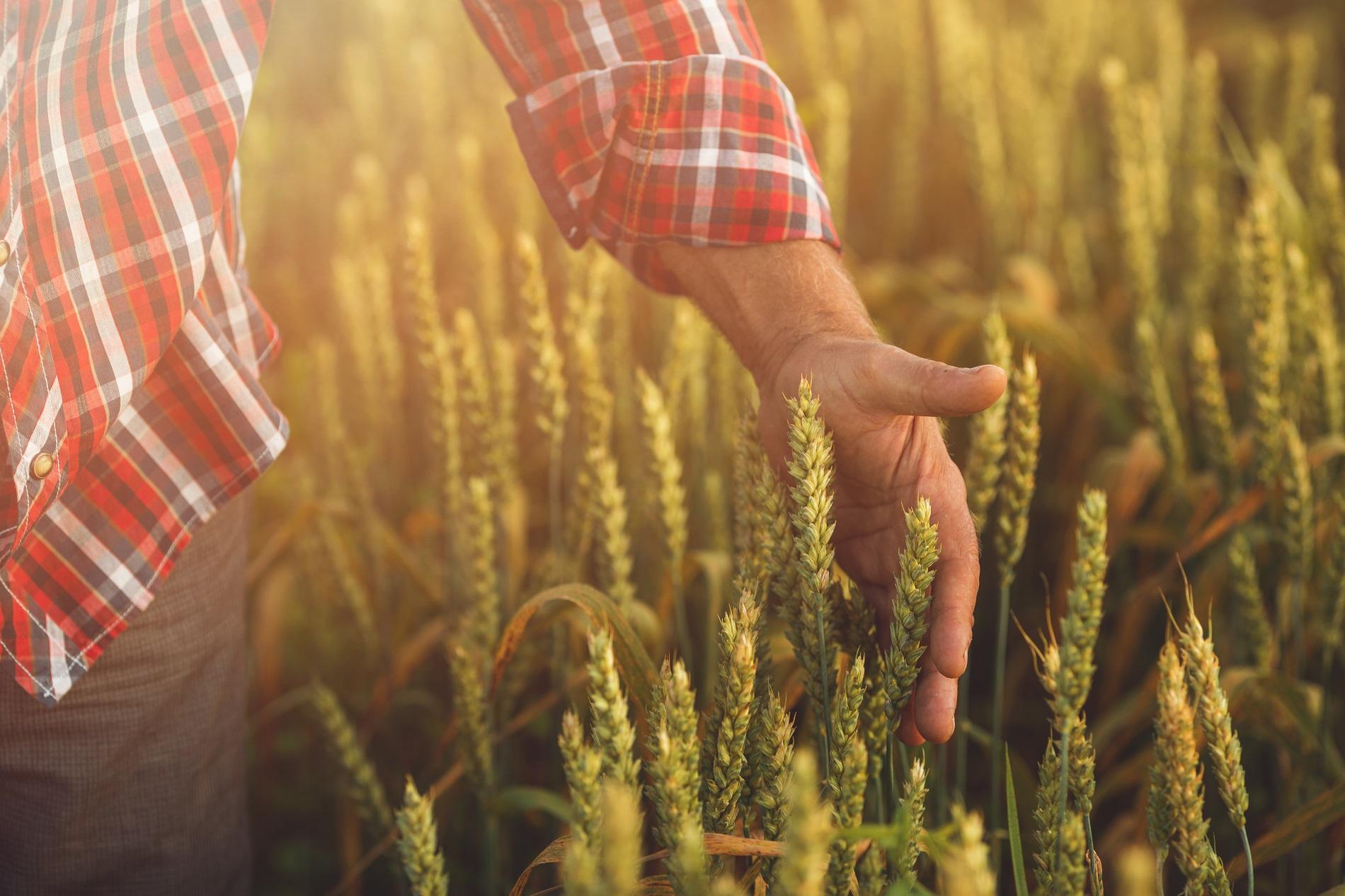 Consejos para la utilización responsable y segura de productos fitosanitarios