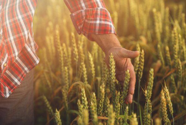 agricultura productos fitosanitarios buenas prácticas