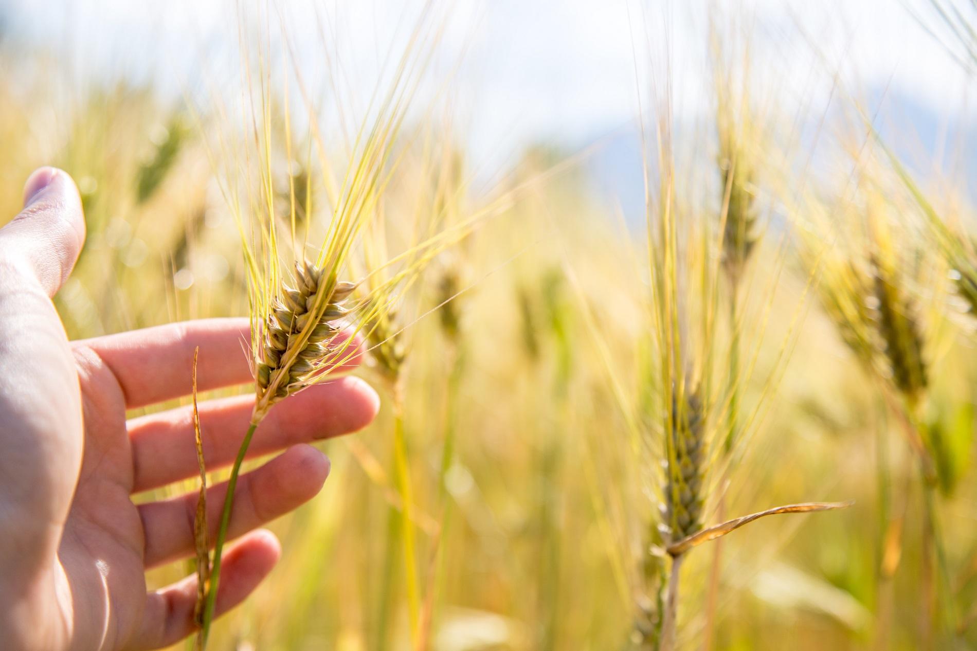 La FAO declara el 2020 como el Año Internacional de la Sanidad Vegetal