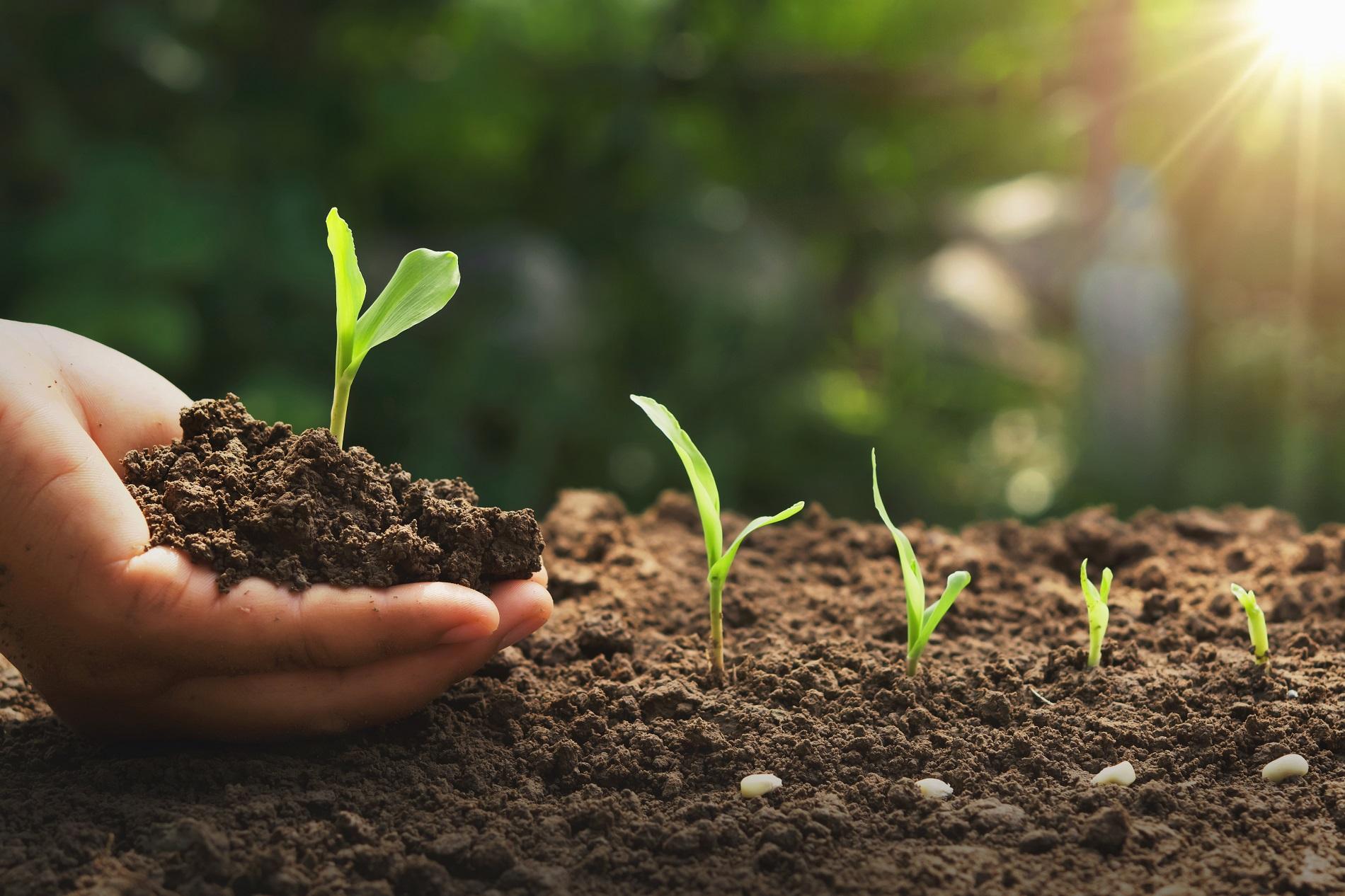 Suelos y cultivos: ¿Cuáles son los más apropiados?