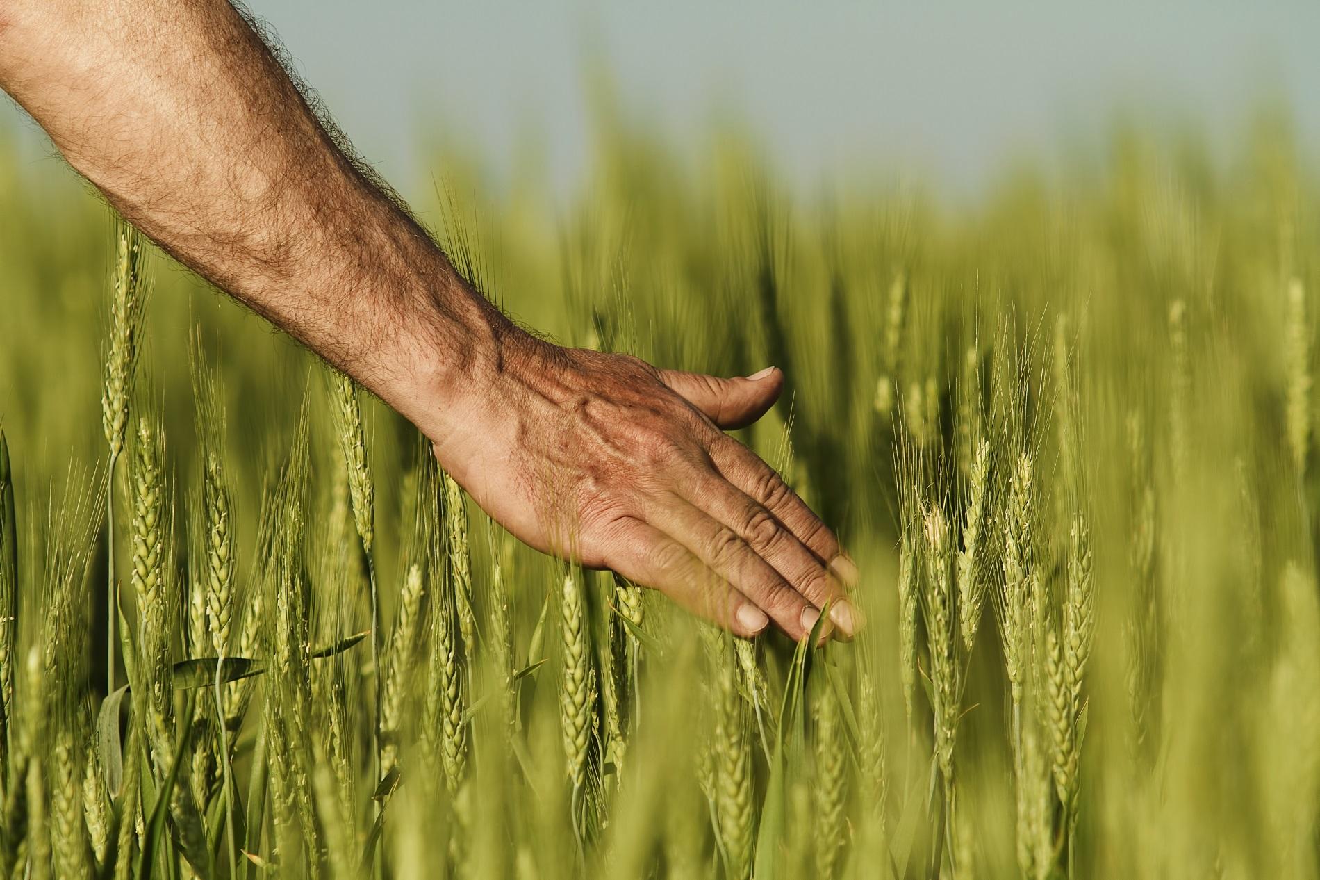 La agricultura como fuente de alimentación sostenible