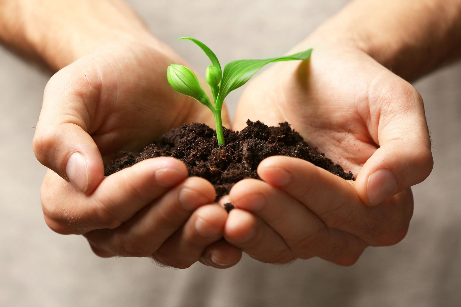 La agricultura como motor de desarrollo rural