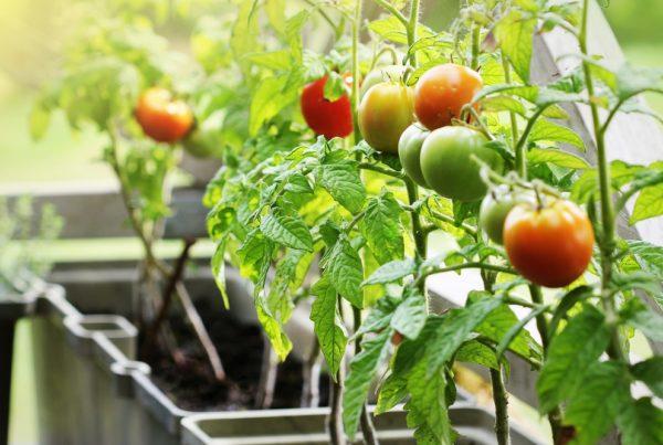 huerto urbano agricultura sanidad vegetal aepla