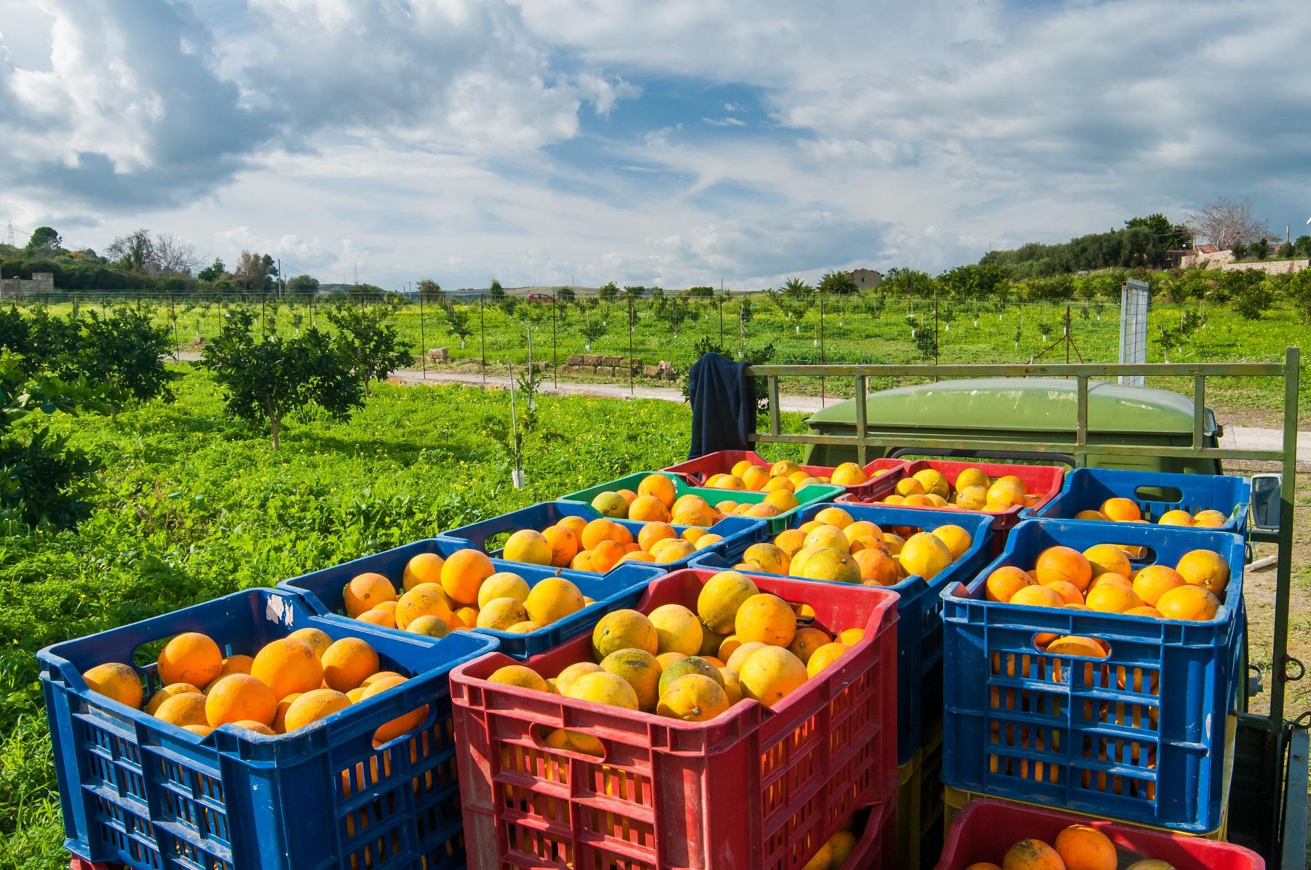 La protección de los cultivos es esencial para reducir el desperdicio alimentario