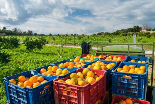 desperdicio alimentario sostenibilidad cambio climático agricultura sanidad vegetal aepla