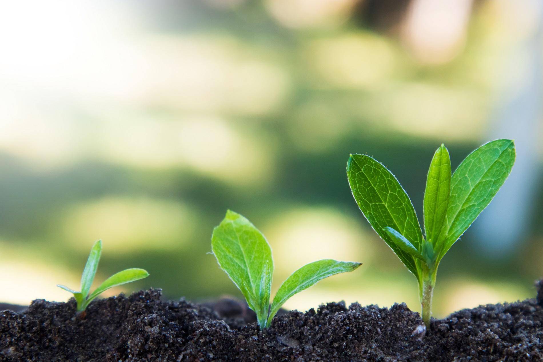 Agricultura, sanidad vegetal y Objetivos de Desarrollo Sostenible