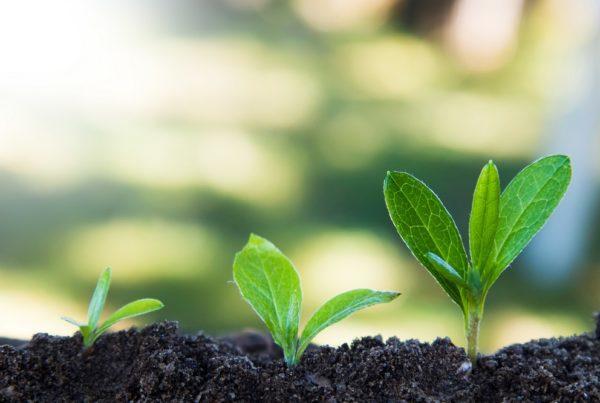 agricultura sanidad vegetal objetivos desarrollo sostenible FAO ONU aepla