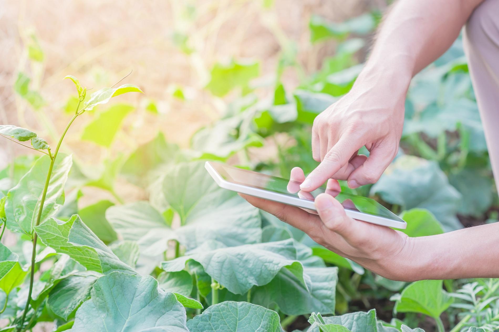 ¿Qué es la agricultura de precisión y qué puede aportar a tus cultivos?