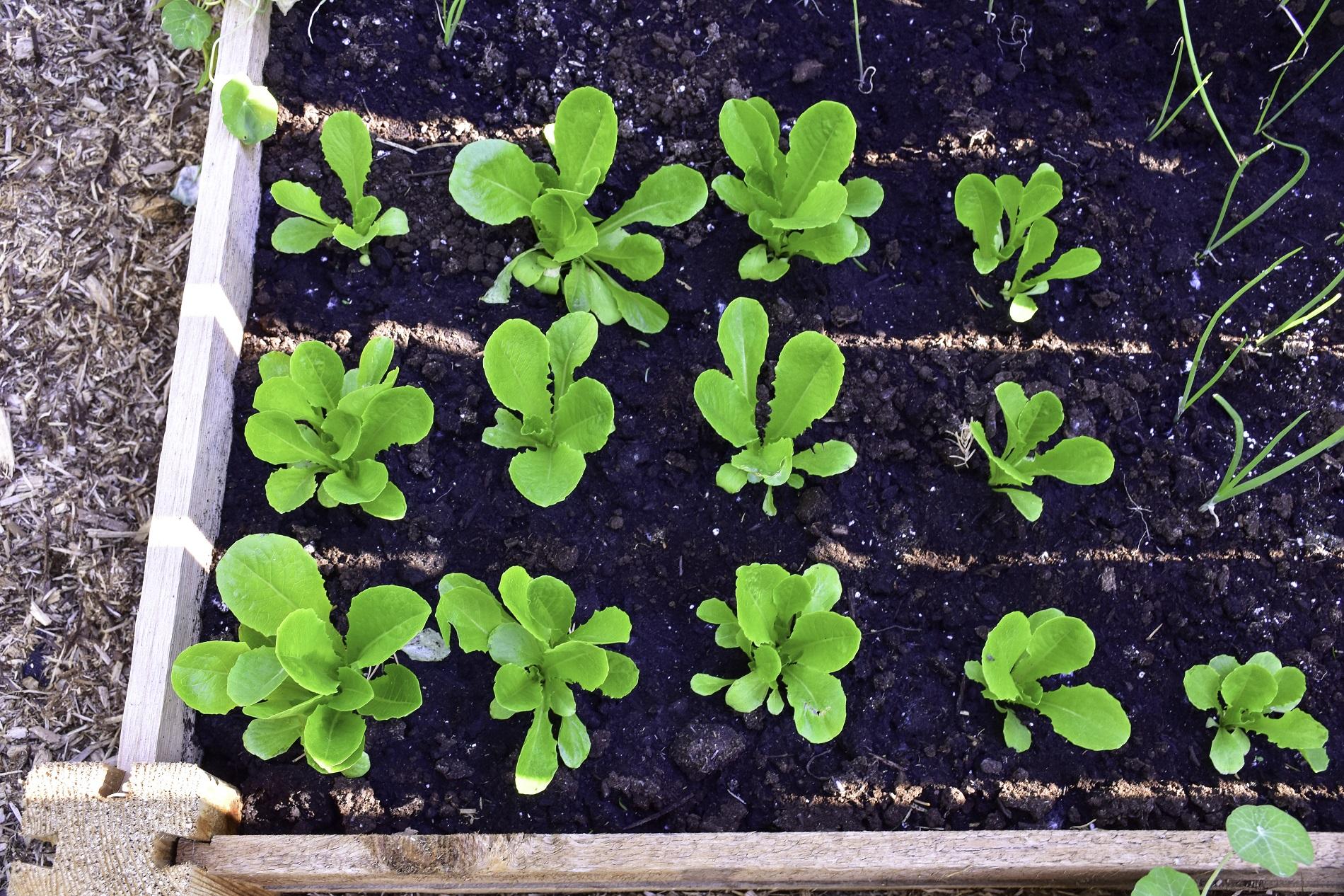 ¿Qué cultivos puedes plantar en tu huerto urbano en primavera?