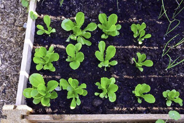 huertos urbanos en primavera cultivos agricultura sanidad vegetal aepla