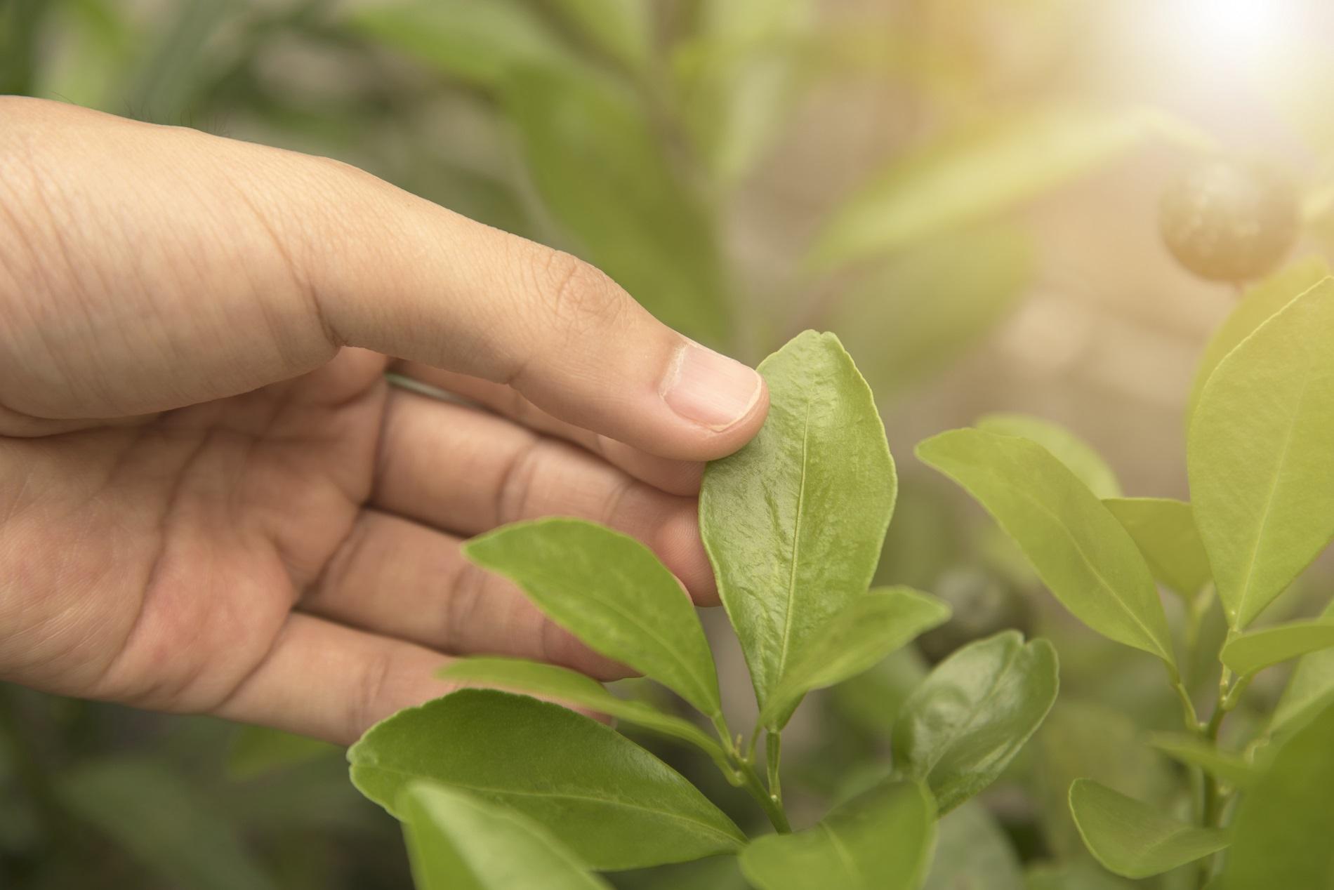 ¿Por qué es esencial la innovación en sanidad vegetal para el futuro de la agricultura?