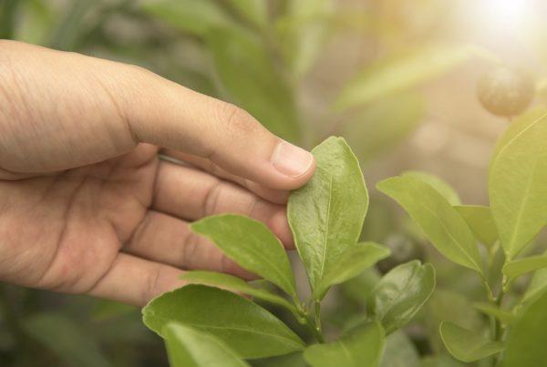 innovación agrícola sanidad vegetal productos fitosanitarios aepla