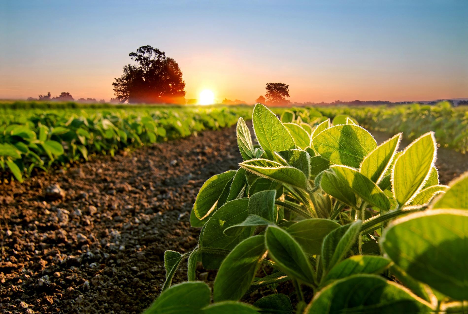 Protocolo de actuación frente al Covid-19 en el ámbito de la agricultura