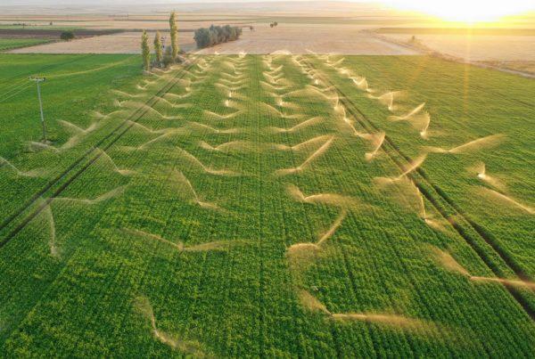 buenas prácticas agrícolas agua de riego irrigación sostenibilidad recursos hídricos escorrentía percolación agricultura aepla