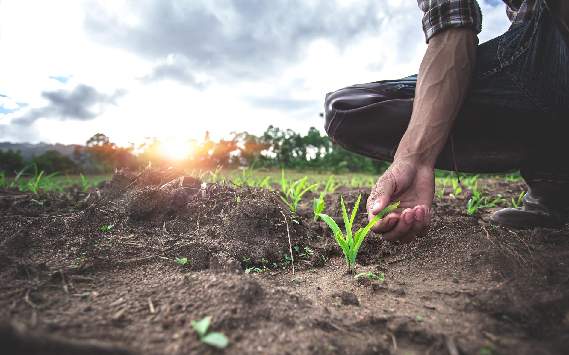 Buenas prácticas agrícolas: Rotación de cultivos