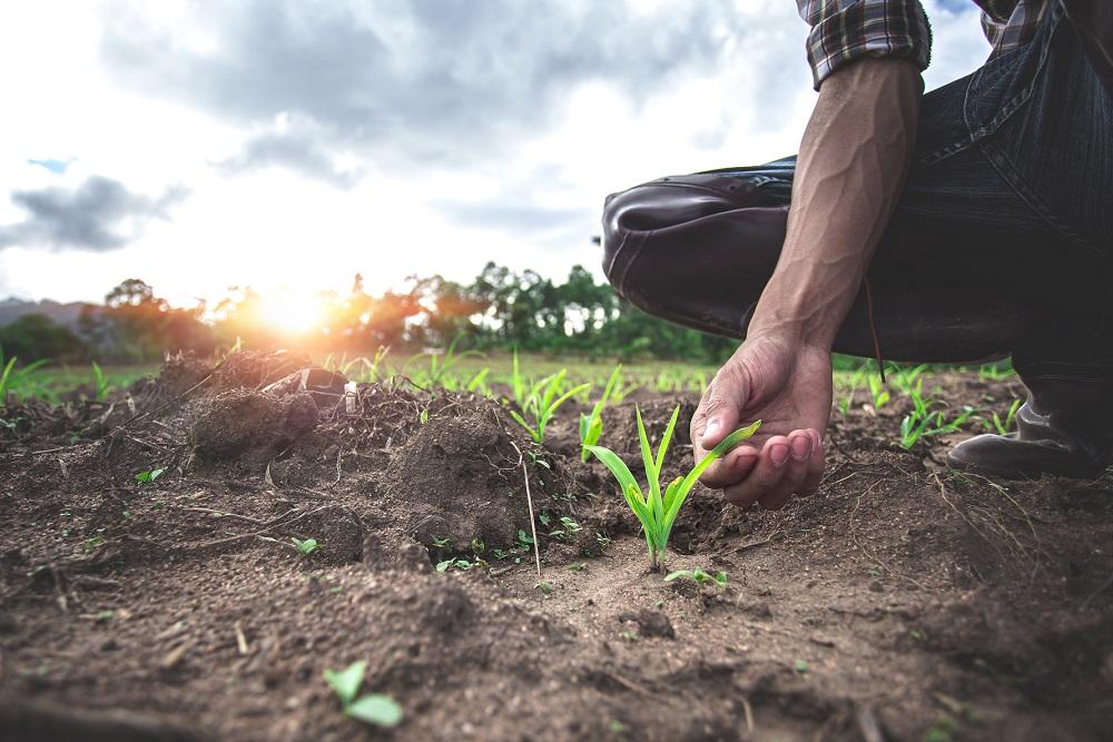 rotación de cultivos buenas prácticas agrícolas sanidad vegetal gestión integrada de plagas agricultura aepla