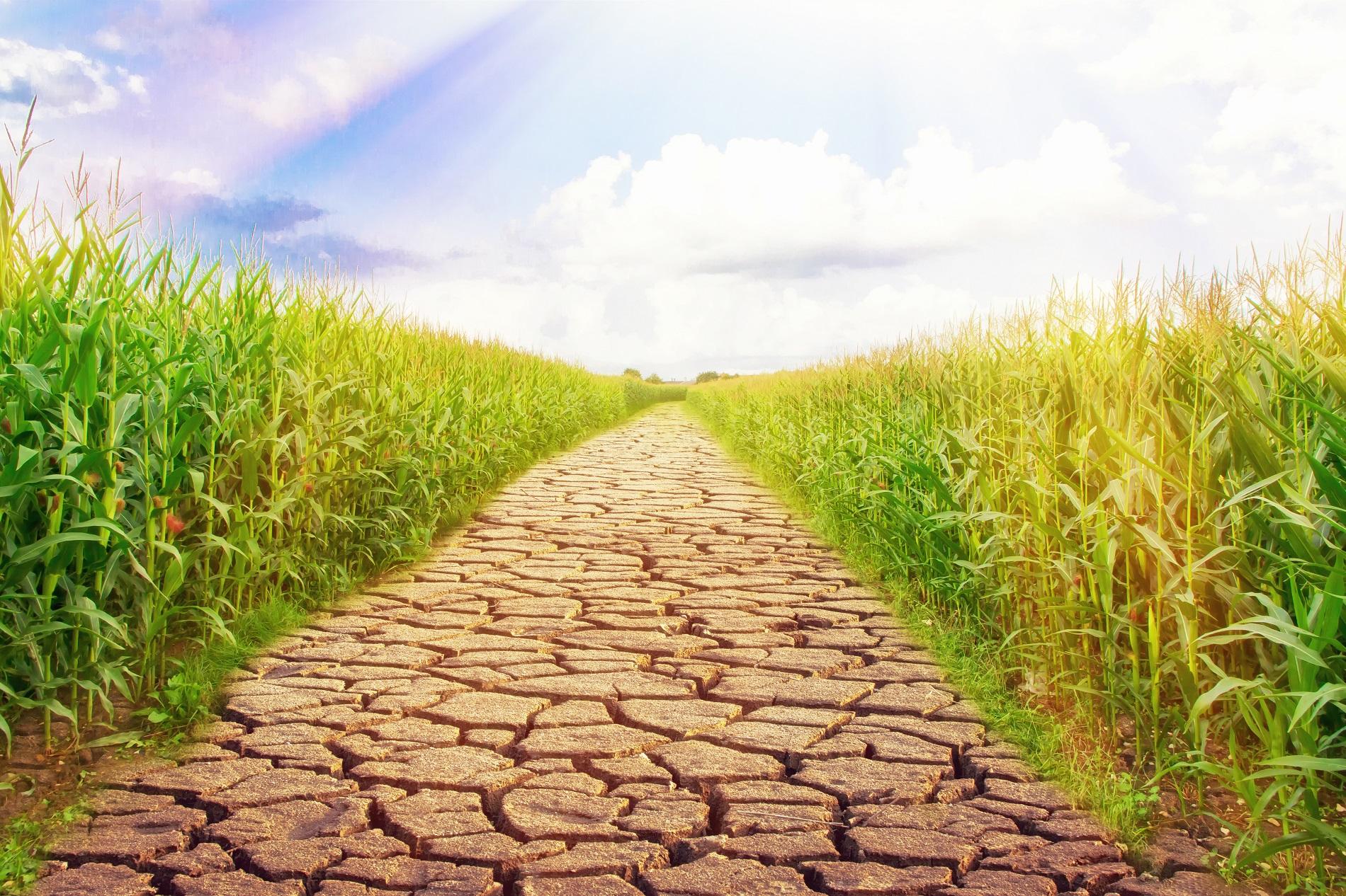 5 medidas sostenibles para hacer frente al cambio climático desde la agricultura