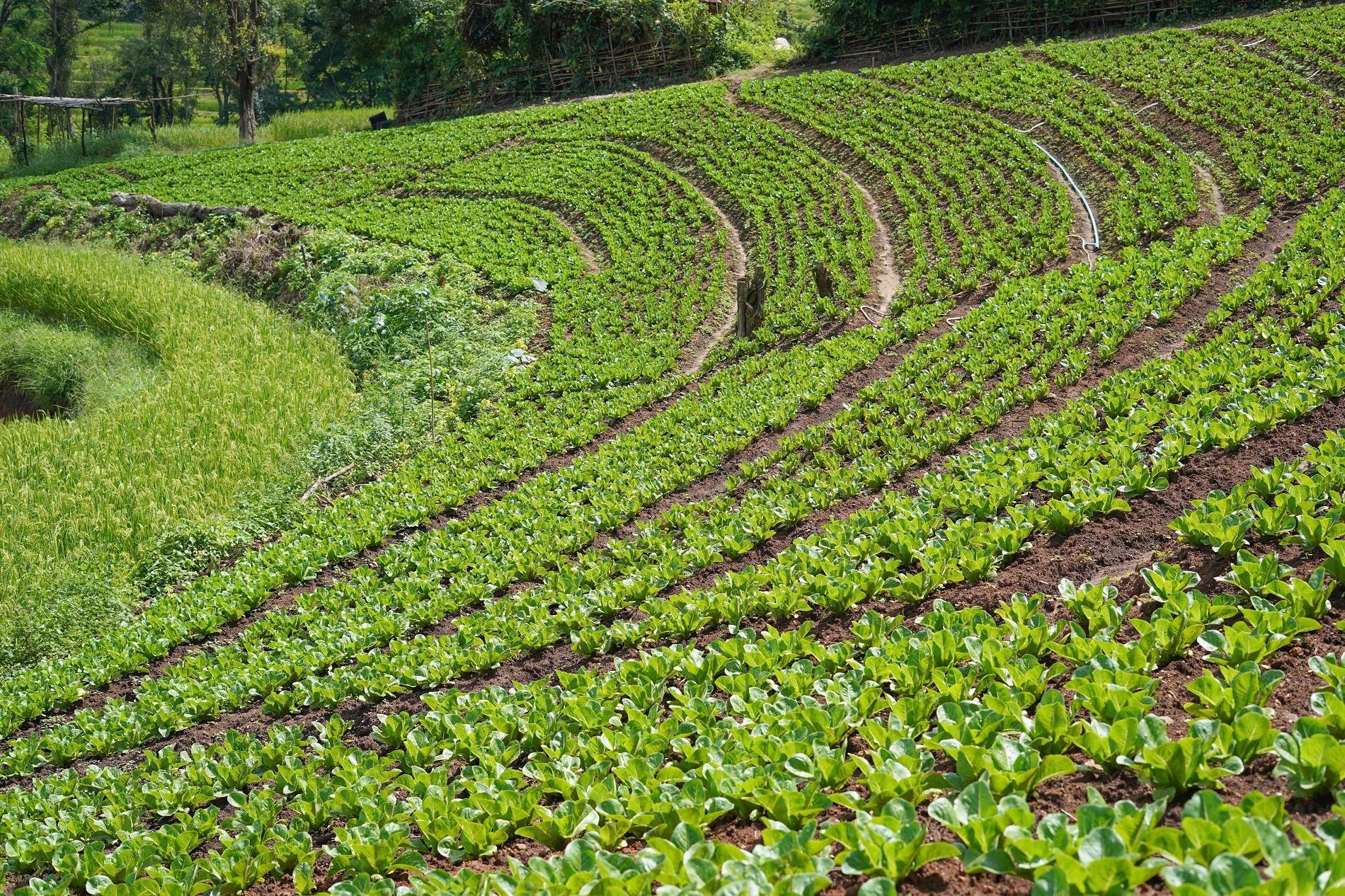 Buenas prácticas agrícolas: Conservación del entorno agrícola