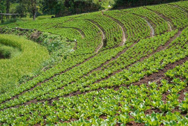 buenas prácticas agrícolas conservación del entorno sostenibilidad sanidad vegetal agricultura aepla