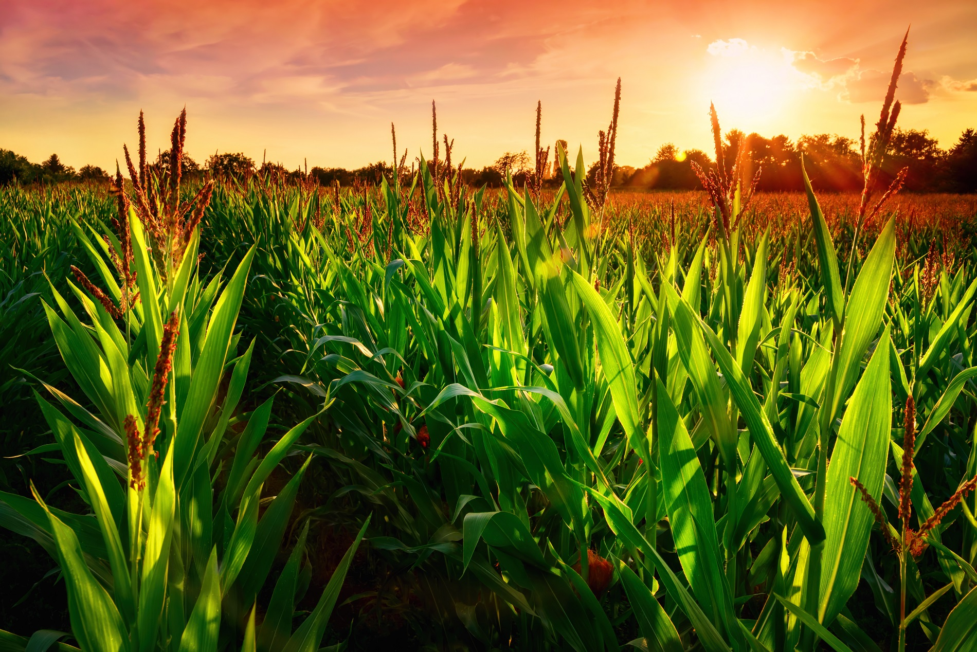 ¿Cómo evitar la aparición de resistencias a productos fitosanitarios?
