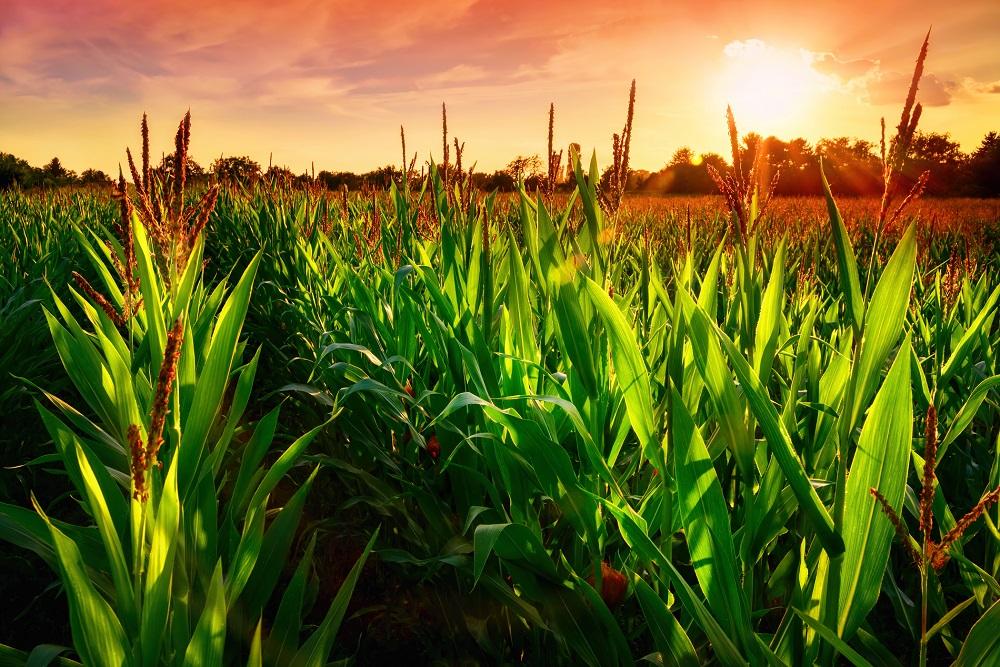 resistencias productos fitosanitarios sanidad vegetal buenas prácticas agrícolas tratamientos fitosanitarios plagas malas hierbas agricultura aepla