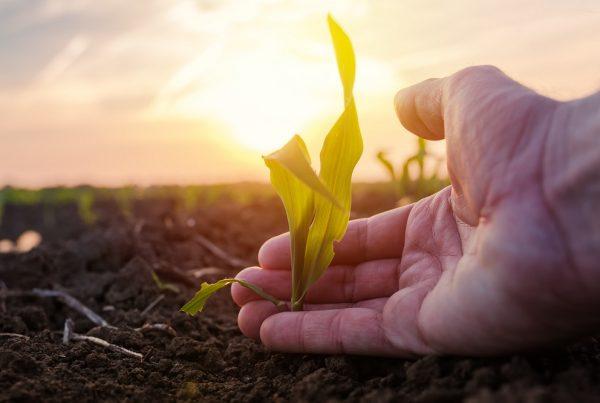 buenas prácticas agrícolas control malas hierbas gestión integrada de plagas rotación de cultivos sanidad vegetal productos fitosanitarios agricultura aepla