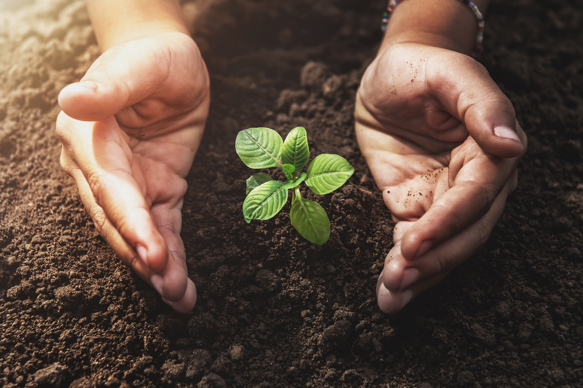 Decálogo esencial para el uso correcto y seguro de productos fitosanitarios