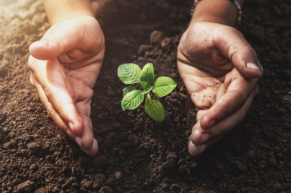 productos fitosanitarios tratamientos fitosanitarios sanidad vegetal agricultura aepla