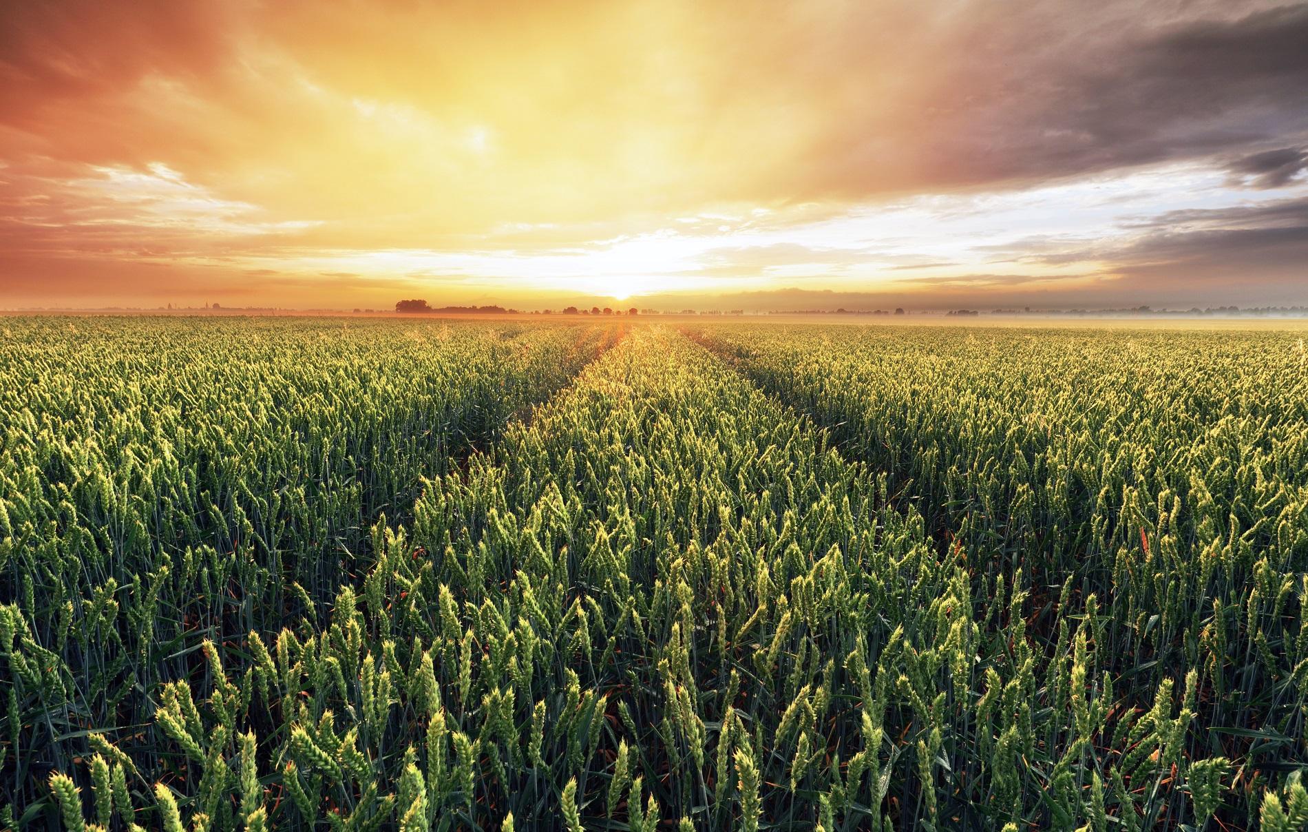 ¿Qué implicaciones tiene la nueva estrategia agroalimentaria de la UE para la sanidad vegetal?