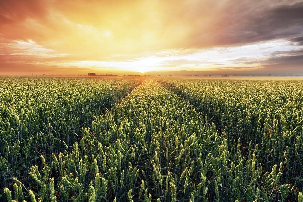 farm2fork de la granja a la mesa sector agroalimentario agricultura unión europea productos fitosanitarios sanidad vegetal aepla