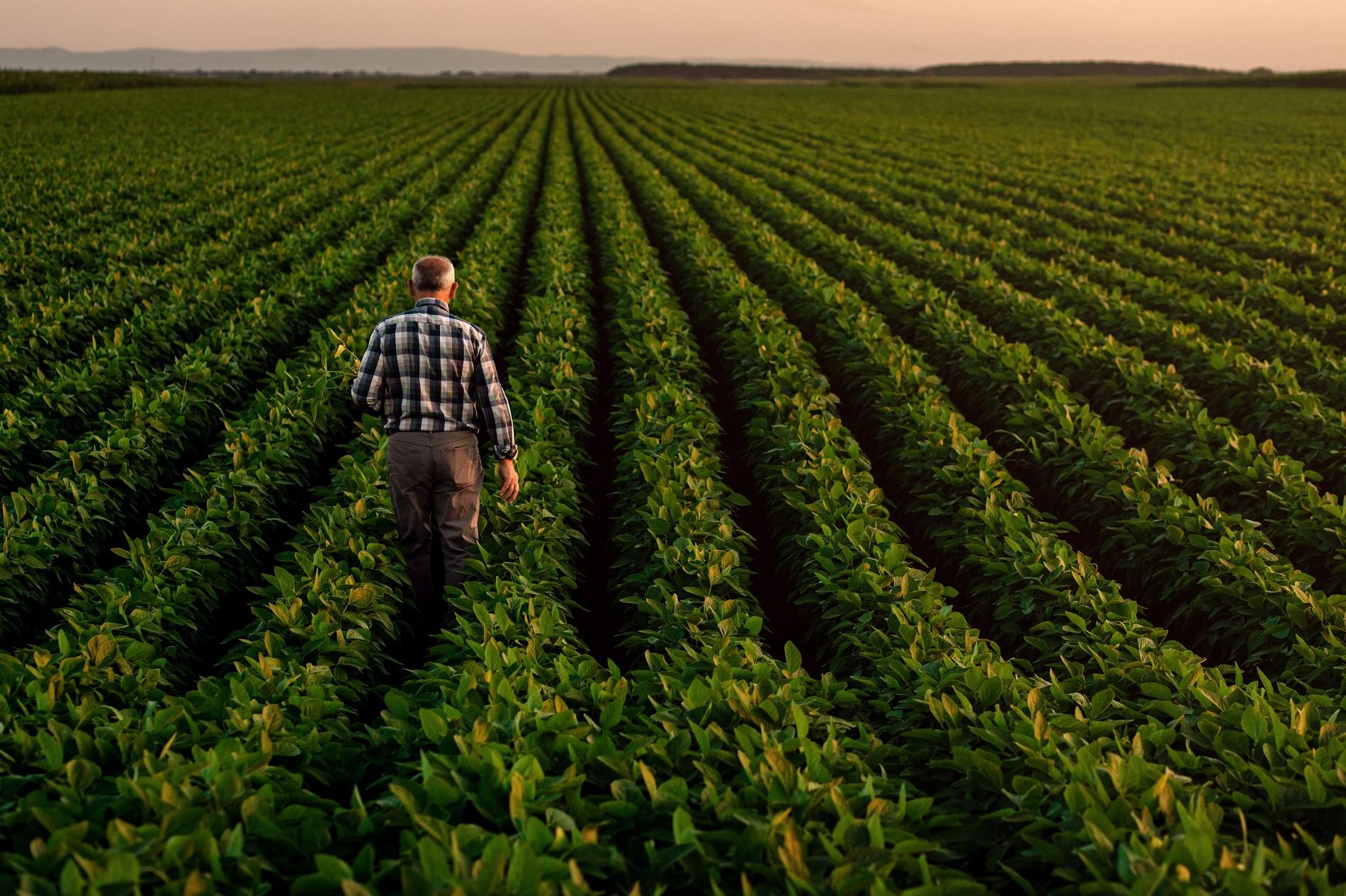 Sanidad vegetal, seguridad alimentaria y competitividad de nuestra agricultura