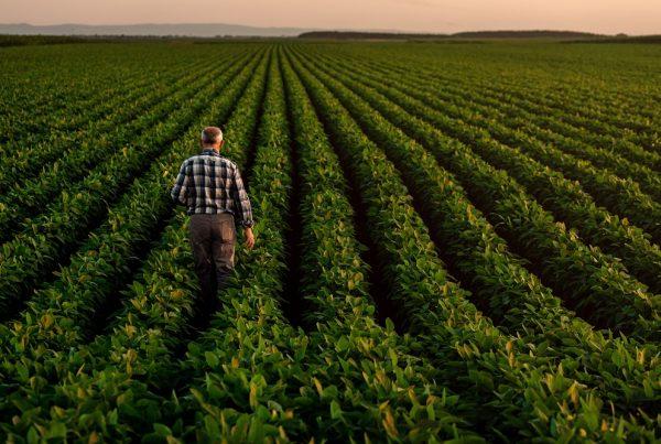 sanidad vegetal seguridad alimentaria competitividad agricultura productos fitosanitarios aepla