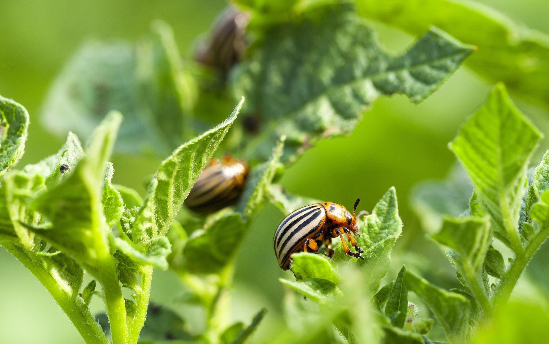 Buenas prácticas agrícolas: Prevención y control de plagas y enfermedades