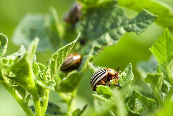 buenas prácticas agrícolas control de plagas gestión integrada de plagas sanidad vegetal productos fitosanitarios tratamientos cultivos agricultura aepla