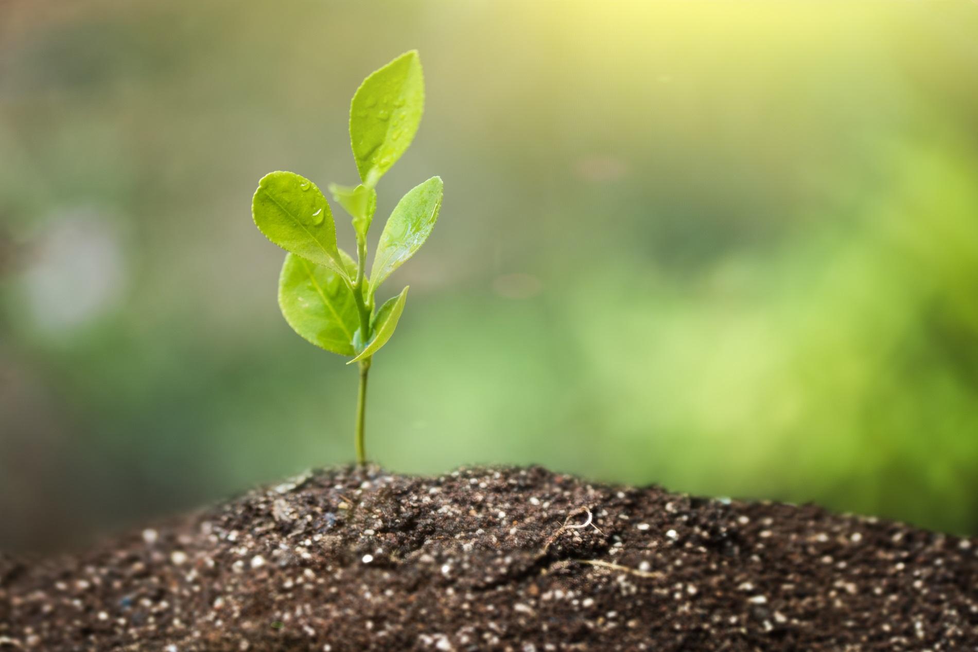 La sanidad vegetal y su utilidad como medicina para las plantas