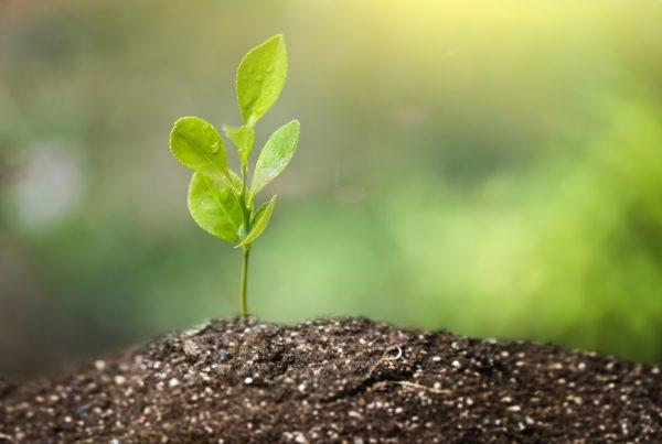 sanidad vegetal medicina para las plantas productos fitosanitarios gestión integrada de plagas protección de cultivos agricultura aepla