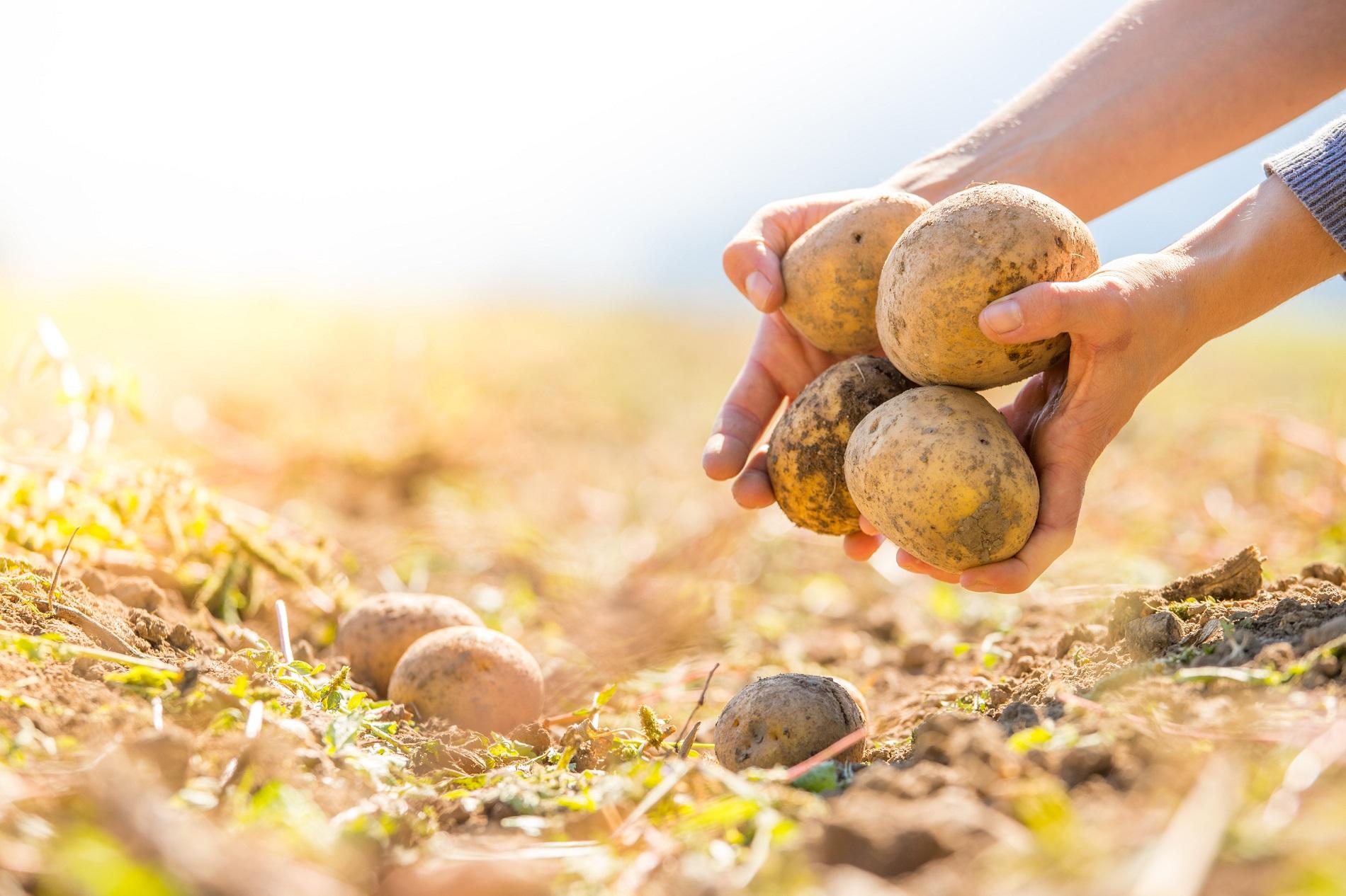 Elementos a tener en cuenta para reducir al mínimo el nivel de residuos en tus cultivos