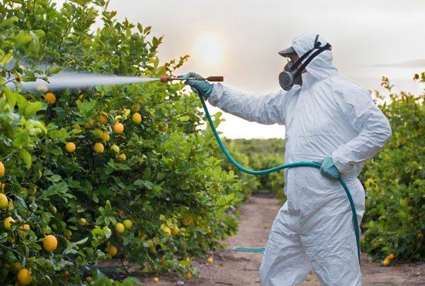 fitosanitarios ilegales seguridad prevención riesgos laborales fraude sanidad vegetal productos fitosanitarios agricultura sostenibilidad aepla