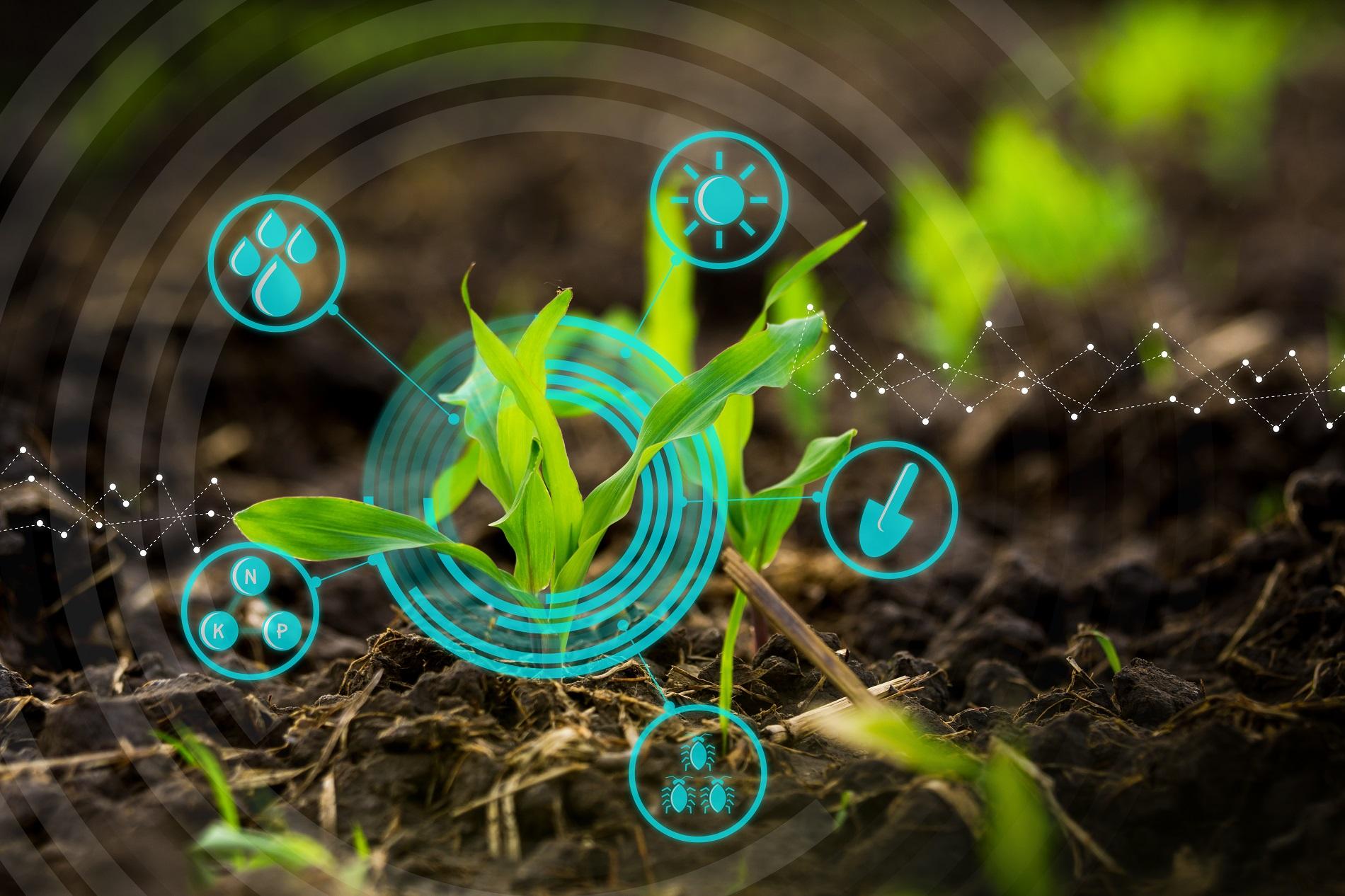 La innovación en sanidad vegetal como defensa frente a nuevas amenazas en la agricultura