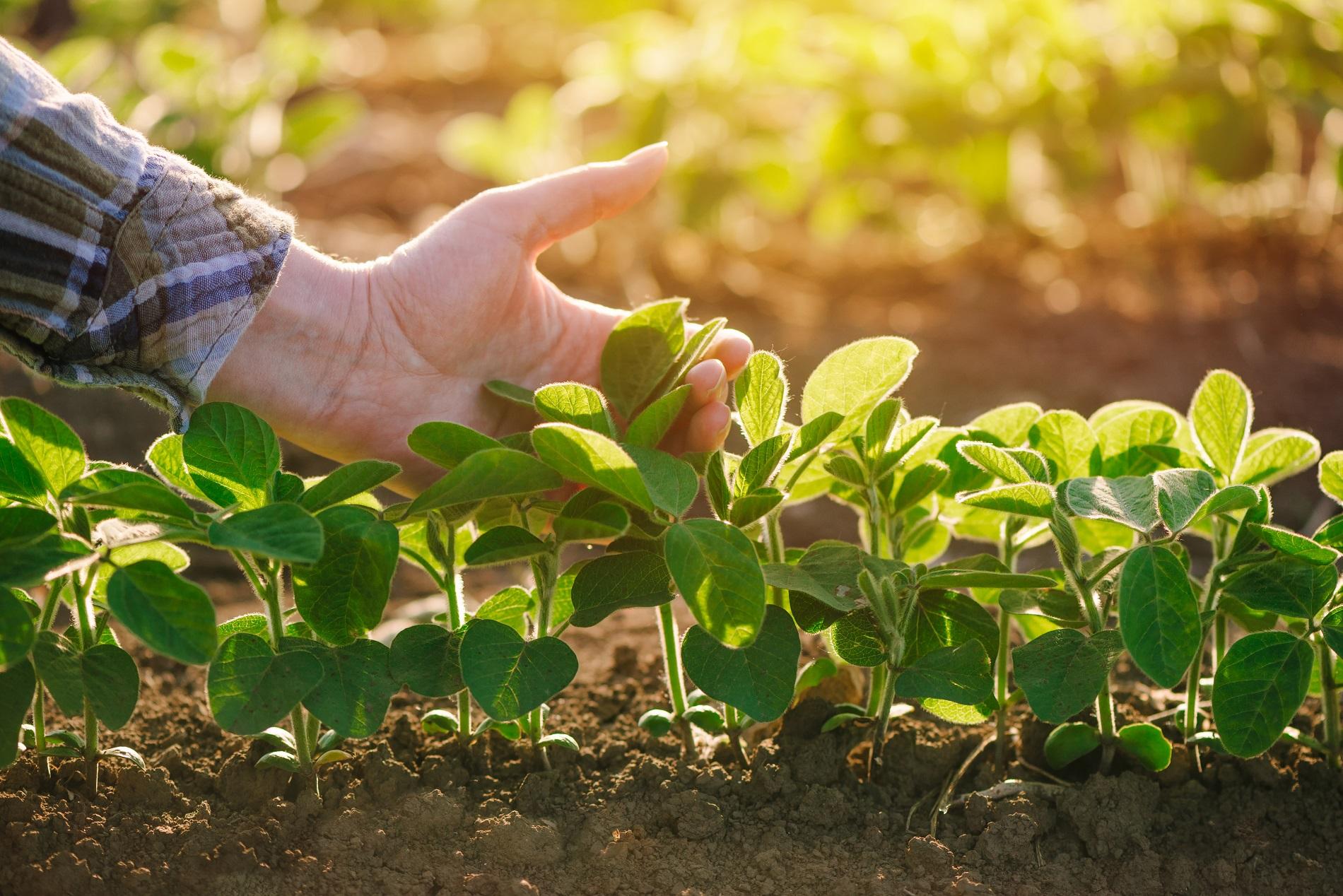 ¿Cómo prevenir la aparición de organismos nocivos en tus cultivos mediante la Gestión Integrada de Plagas?