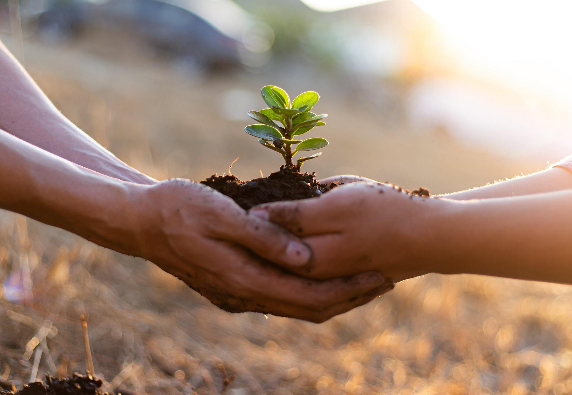 ¿Cómo avanzar hacia una agricultura cada vez más sostenible?