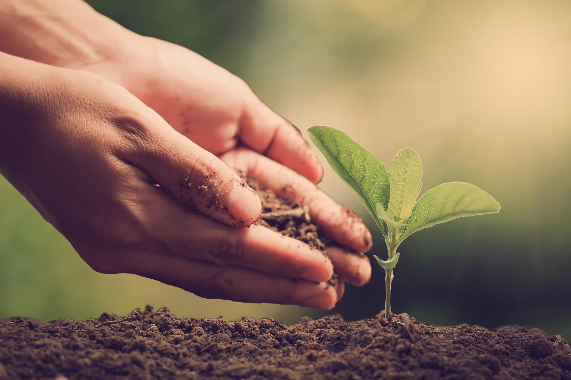 Las buenas prácticas agrícolas como factor clave esencial para el progreso de nuestra sociedad
