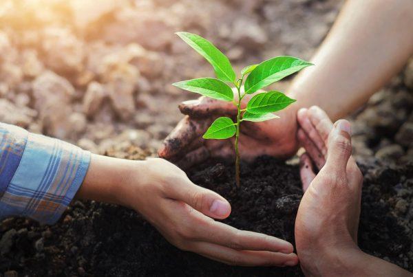 compromisos 2030 industria fitosanitaria europea sanidad vegetal innovación economía circular protección personas medio ambiente agricultura aepla