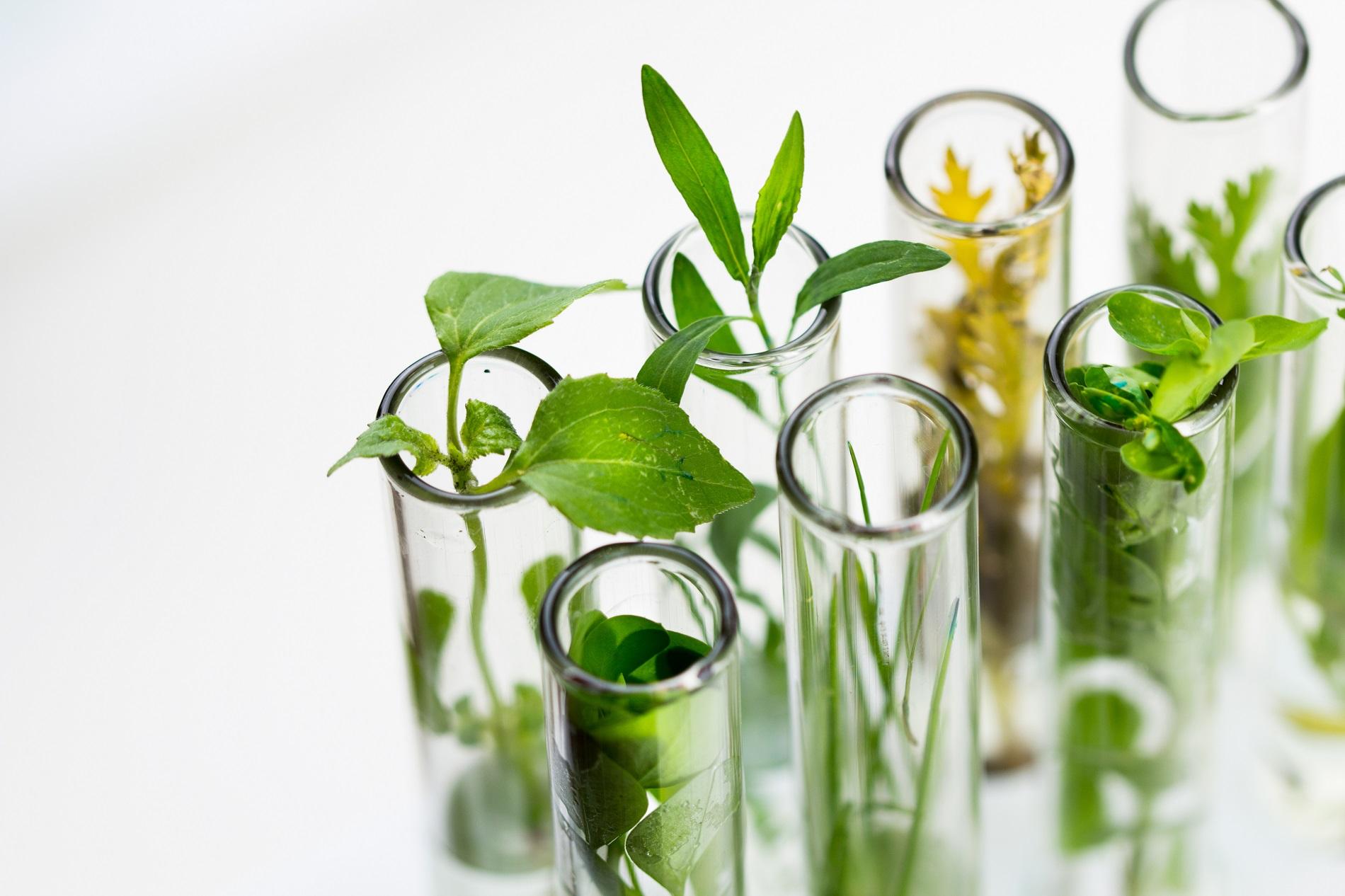 La inversión en sanidad vegetal como compromiso de innovación y sostenibilidad