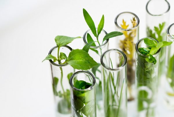 sanidad vegetal inversión innovación sostenibilidad agricultura aepla