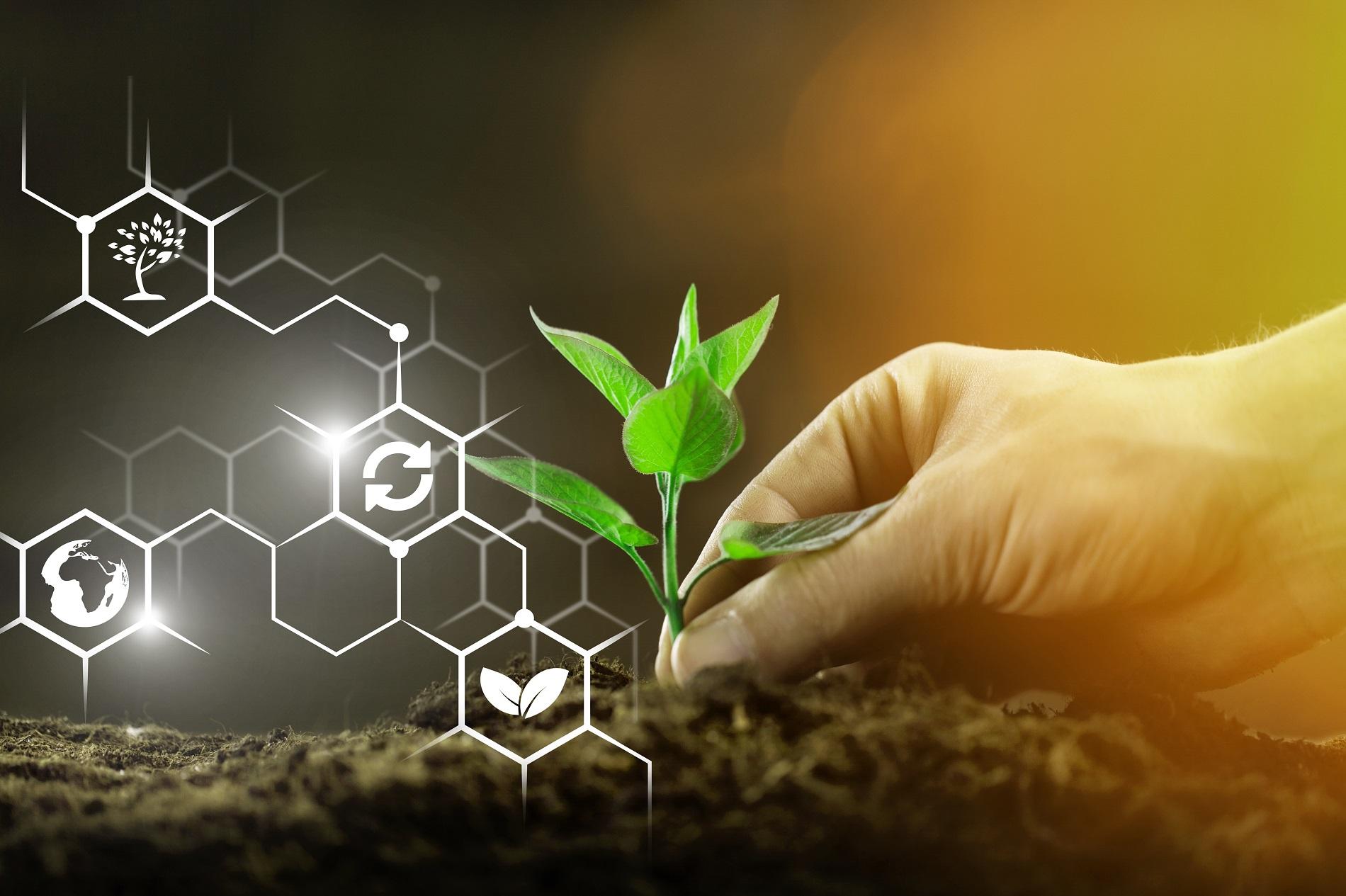 La sanidad vegetal como agente clave en los retos presentes y futuros de nuestra sociedad